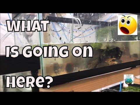 Water Changes in the Fish Room Aquarium Fish Room VLOG