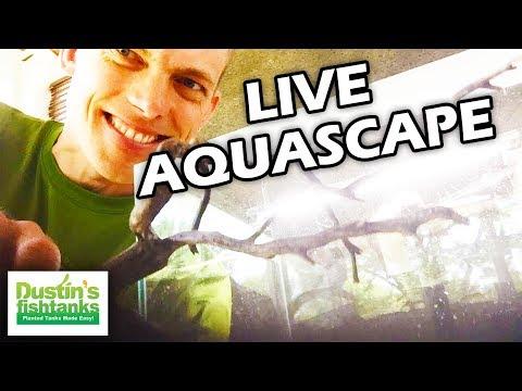 LIVE Planted Aquarium Setup