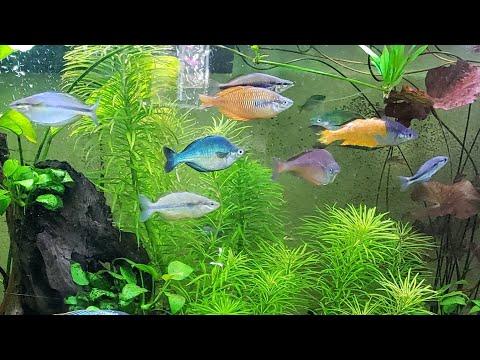 The Rare & Beautiful Rainbow Fish Room of Seattle – Bentley Pascoe's Aquarium Gallery Room pt.1/2