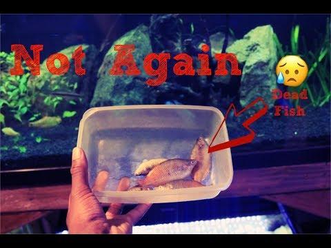 Fish Boiled Alive| Aquarium Heater Malfunction