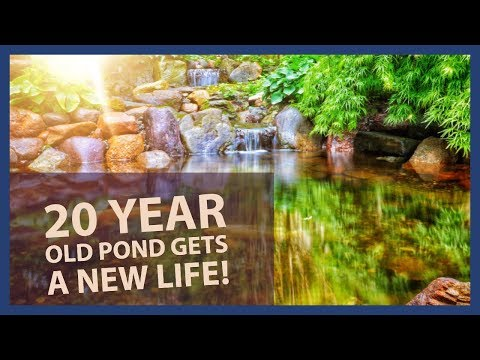 20 Year Old Pond Gets A New Life! Fish Pond Renovation in Madison, NJ
