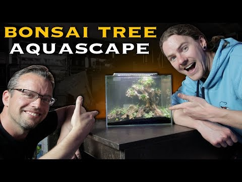 Shrimp Aquascape With George Farmer – Part 2