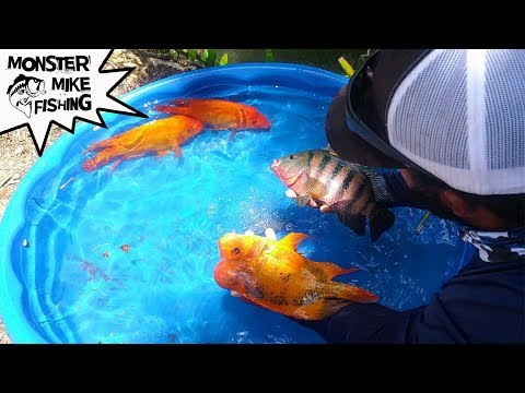 DIY Fish Pool Pond! | Monster Mike Fishing