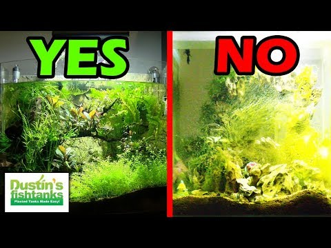 UNBALANCED PLANTED AQUARIUM – Tale of 2 Fish Tanks