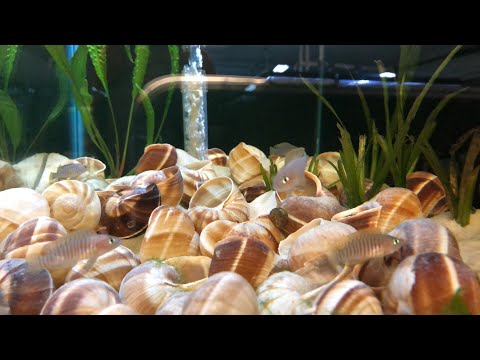 Friday Night Live Q&A Freshwater Aquarium Keeping Fish Shrimp and Plants
