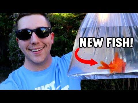 NEW POND FISH IS HERE!