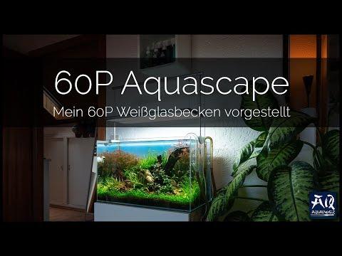 MEIN 60P AQUASCAPE IM DETAIL | mein größtes Aquarium vorgestellt | AquaOwner
