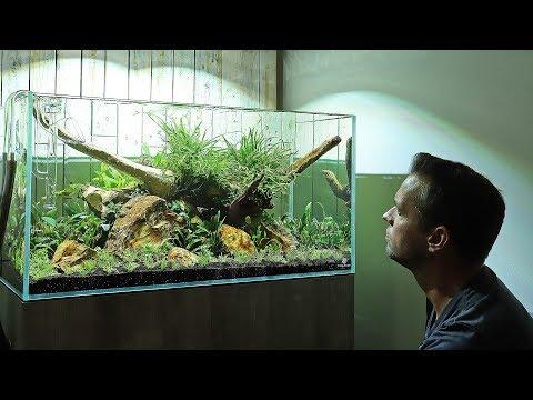 STUNNING Aquascaper 900 Nature Aquarium Aquascape