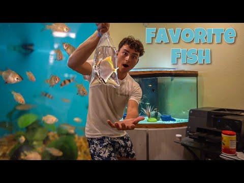 BUYING My FAVORITE AQUARIUM FISH!