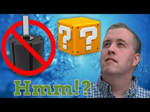 You don't need an Aquarium Filter. You need…