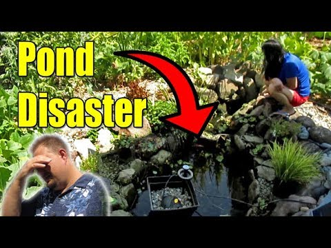 Backyard Fish Pond Disaster!