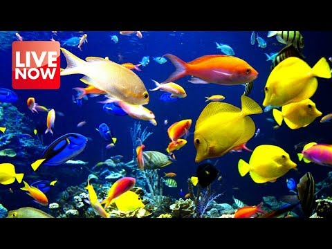 Relaxing Aquarium 24/7  🐟🐠 Relax Study Chill Sleep Meditation Music – Relaxing Screensaver