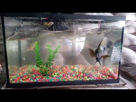 Catching Exotic Pet Fish for Aquarium!