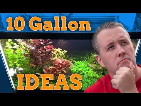 10 Gallon Aquarium Stocking Ideas – Tons of Color!