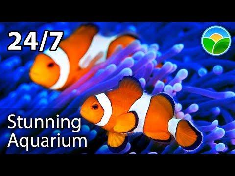 🐟🐠 The Best Relaxing Aquarium 24/7 🔴 Relax Study Chill Sleep Meditation Music Screensaver