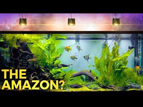 Enormous Amazon Inspired Aquascape