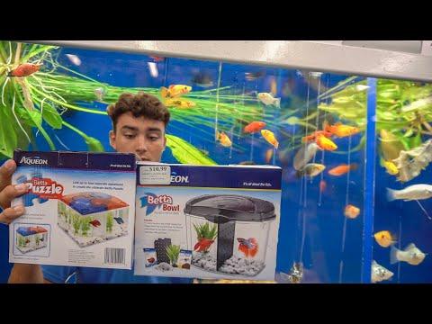 $20 Aquarium CHALLENGE! *With FISH*