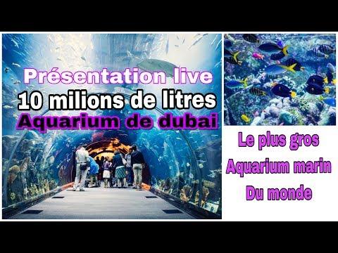 Présentation live du plus gros aquarium du monde de Dubai de 10.000.000 litres