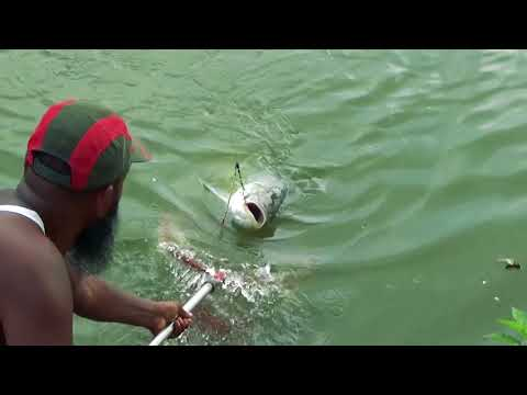 Best Catla Fishing Videos By Pond Owner Rashel