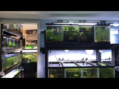 How to Sell Aquarium Fish, Shrimp, and Plants