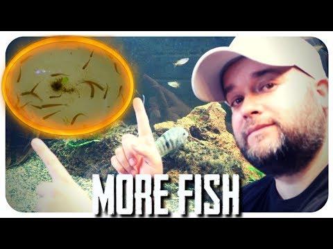 ADDING FISH TO HUGE AQUARIUM