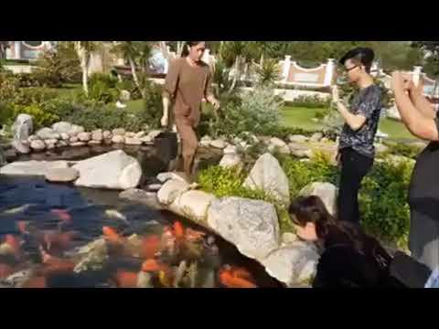 Koi Fish – cá koi việt nam đẹp –  tham quan cá cảnh đẹp beautiful fish