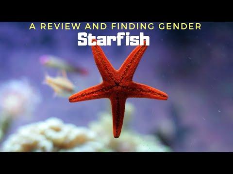 A Live Colourful Star in your Aquarium…
