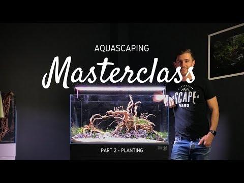 Aquascaping Masterclass | Step by Step Aquascape Tutorial – Part 2