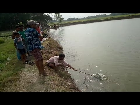 Fish hunting at pond || pass pond || west bengal || india