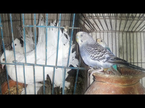 আশা পাখি হাউজ , Asha pakhi house ! Bird & Aquarium fish Market , Dhaka, Bangladesh
