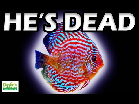 Aquarium Fish Keeping LEGEND is DEAD