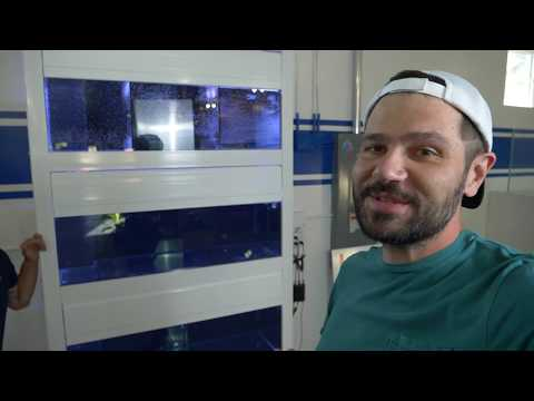 Vlog 11: Setting Up The FISH System from Mode Aquariums