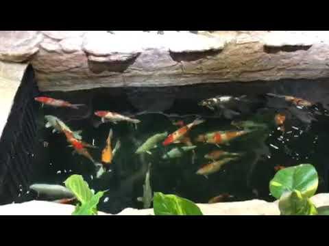 Aquarium with full of big fish