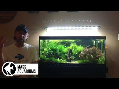 """SNEAK PEEK, All My Aquariums: Plus My Thoughts on the YouTube Fish """"COMMUNITY"""""""