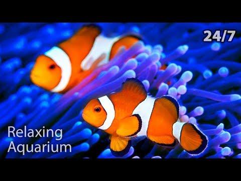 🔴 The Best Relaxing Aquarium 24/7 🐟🐠 Relax Study Chill Sleep Meditation Music Screensaver