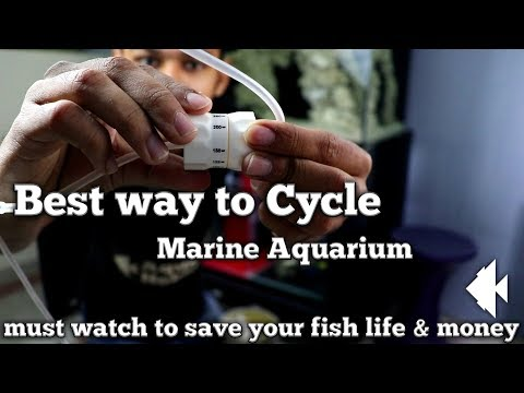 How to Cycle marine aquarium