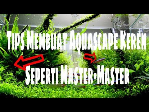 Cara Membuat Aquascape Keren Seperti Master-Master | Aquascape Indonesia | Aquatips