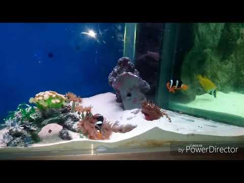 भारत का सबसे पहला और विशाल fish aquarium || india's largest fish aquarium Udaipur || bigest fish