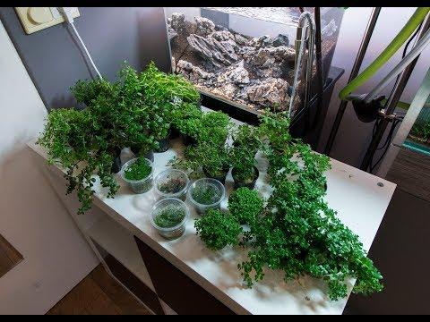 Iwagumi Aquascape Heavy Planted Nano Aquarium 45P