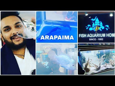 Fish Aquarium Home at IIPTF 2018 India International Pet Trade Fair, Delhi