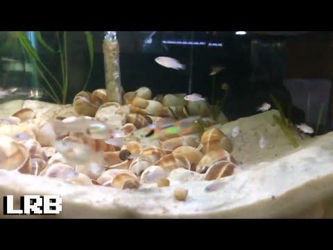 Friday Night Live Q&A Keeping Freshwater Aquarium Fish Shrimp and Plants