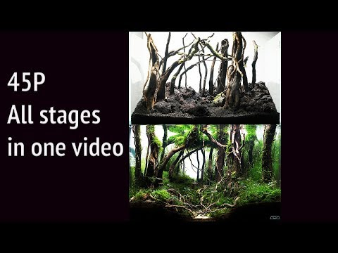 Forest Aquascape Step By Step 45P