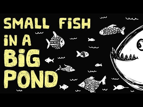 The Small-Fish Big-Pond College Problem and a Few Helpful Tips