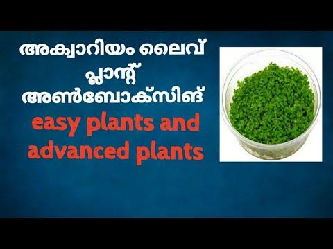 അക്വാറിയം ലൈവ് പ്ലാന്റ് അൺബോക്സിങ്, aquarium live plant unboxing in malayalam