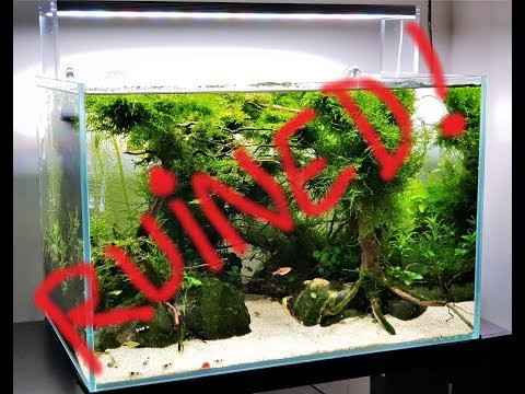 Forest aquascape – Ruined. . .