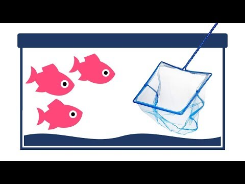 How to Net Aquarium Fish