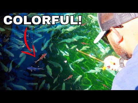 Catching Colorful AQUARIUM Fish in PRIVATE POND!
