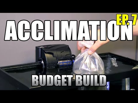 Acclimating Your New Fish – Float vs Drip Acclimation Beginner Saltwater Budget Aquarium