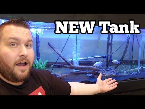 BIG Aquarium For NEW Predator Fish