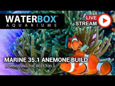 Waterbox Live: Marine 35.1 Anemone Aquarium Setup